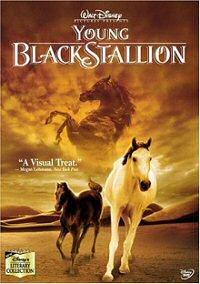 Young Black Stallion DVD